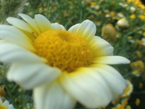 Photojojo flower shot