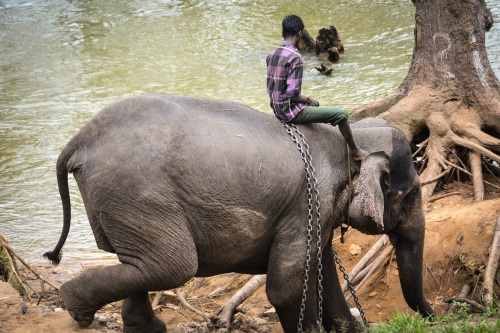 The Camp is The Property of Jungle Lodges and Resorts Ltd, Govt. of Karnataka