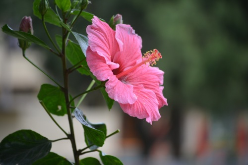 If you just want to relax, you can adore a variety of colourful and exotic flowers bloom in Coorg.