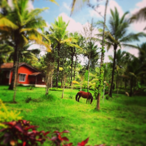 An Instagram Shot of the Eco Habitat Resort. With the pony and a bunch of other animals, the Eco Habitat resort was far from the maddening crowd in city.